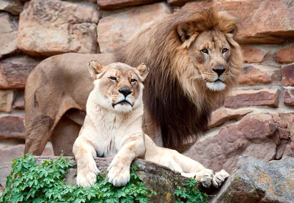 Things to do in Fort Worth Zoo